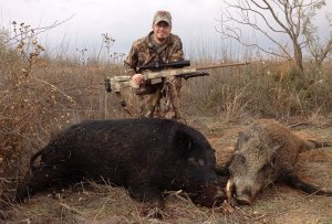 300 lb hog on the left, just under 200 on the right
